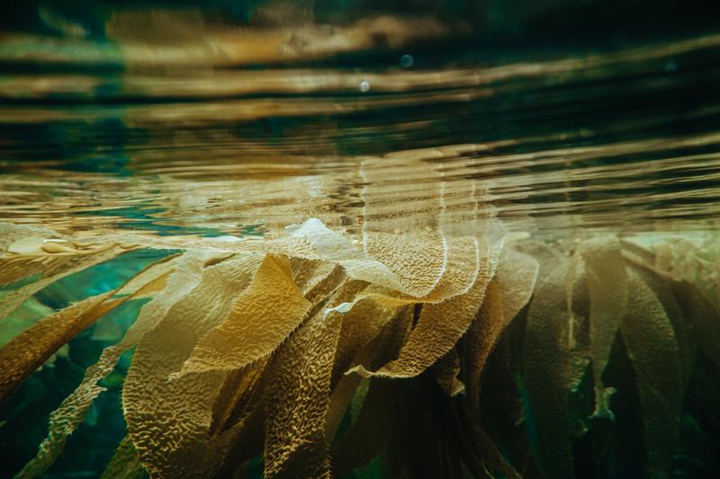 alghe sostenibili